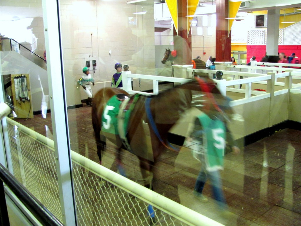 Bettors could see the horses through the glass windows of the paddock where they are paraded before a race. (Photo by Mark Reutter)