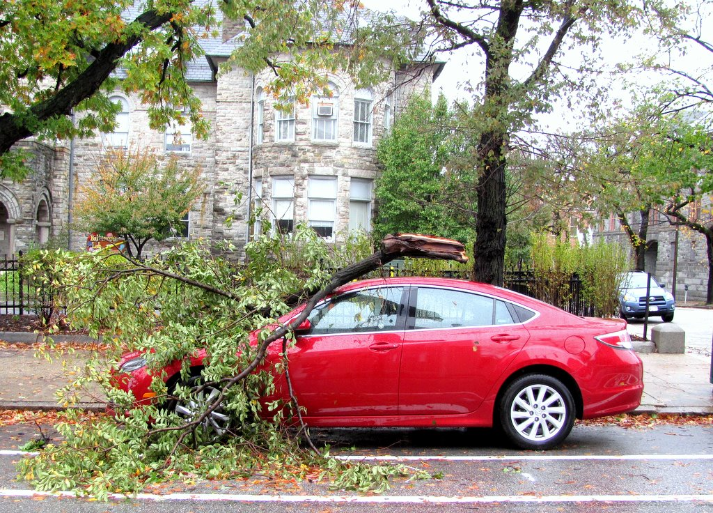 A downed tree on the 2300 block of St. Paul Street shattered the windshield of this car. (Photo by Mark Reutter)