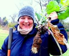 Root veggies from the wild: a burdock dug up in Wyman Park by urban forager Marta Hanson.