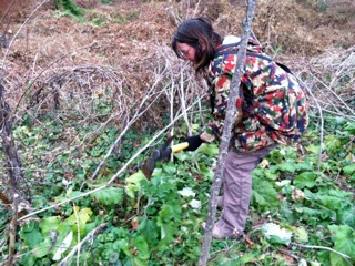 Martha Stauss digging wild burdock. (Photo by Marta Hanson)