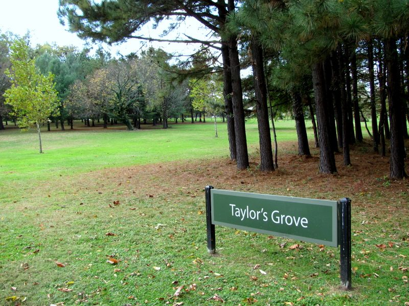 Taylor's Grove, northwest of the lake, would be saved under the new plan. (Photo by Mark Reutter)