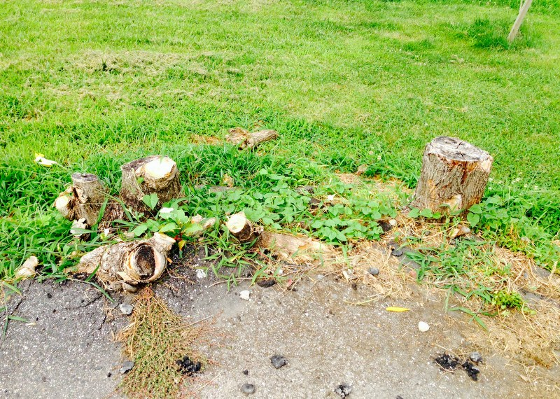 The community wants the city to help by removing stumps and getting them a water source for a the trees and other plantings they plan. (Photo by Danielle Sweeney)