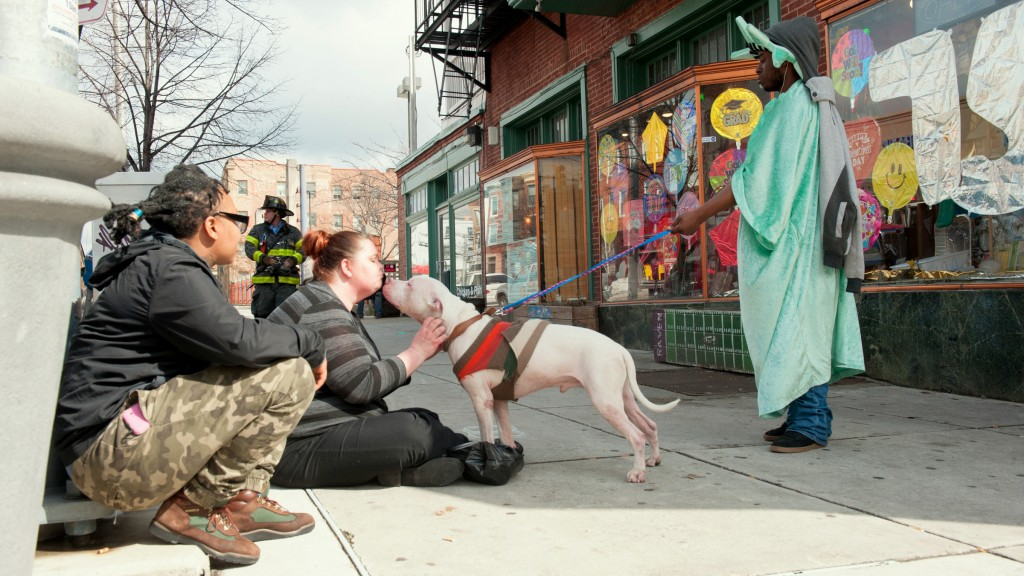 Caring for Junior the pit bull. (John Dean)