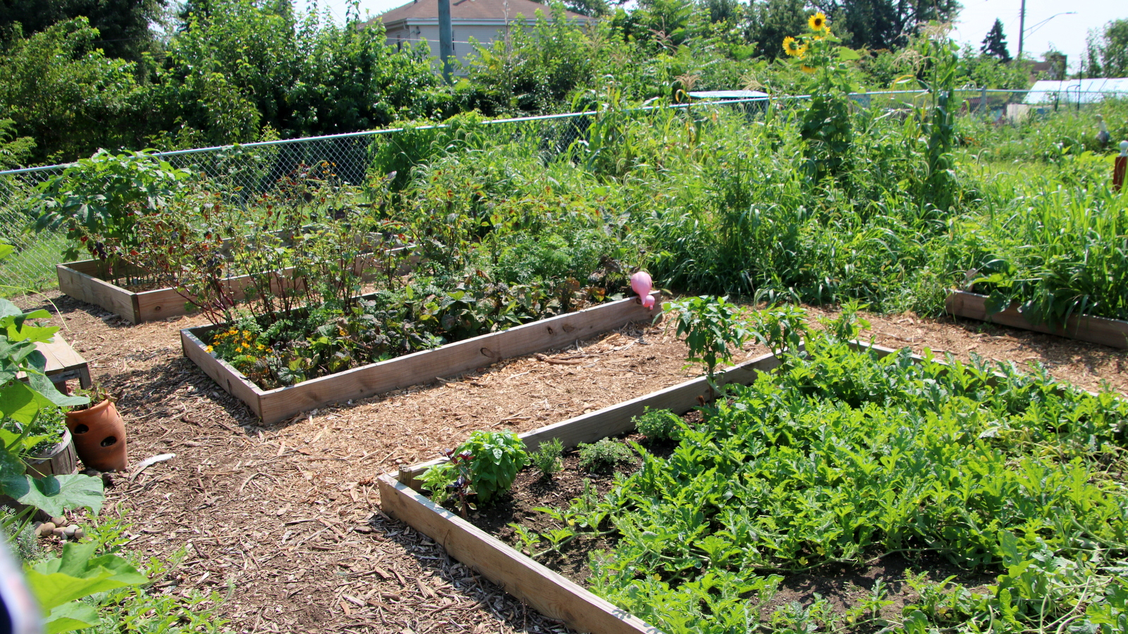 Raised beds tended by Curtis Bay residents. (Fern Shen)