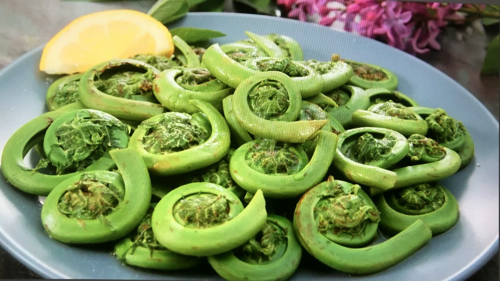 Fern fiddleheads, picked when they're curled tight, just before they start to unfurl, are tender and tasty. (thespruceeats.com)