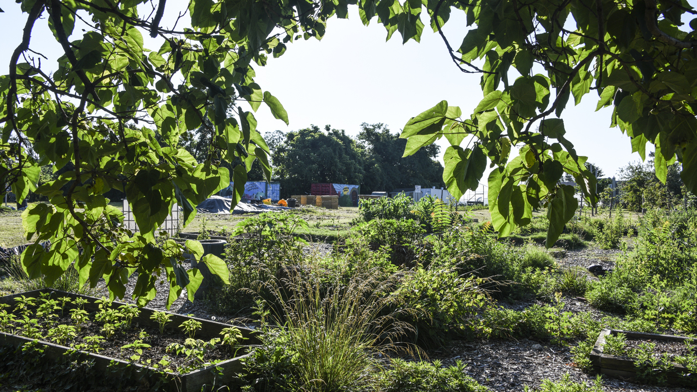 The Housing Authority of Baltimore City is trying to evict the Cherry Hill Urban Community Garden from its 1.5 acre plot. (J.M. Giordano)